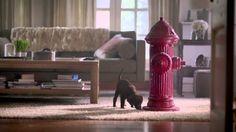 "Proter & Gamble, Bounty ""Bounty dogs, fire"" (Publicis Kaplan Thaler)"