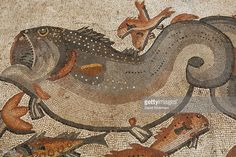 Big and small fish are seen in this detail from an intricate ancient Roman mosaic as it is revealed some 13 years after it was first discovered in the ruins of a 4th century AD building, on July 1, 2009 in Lod in central Israel. The beautiful 1,700 year old mosaic floor, which is regarded as one of the most magnificent and largest ever revealed in Israel, was first uncovered in 1996 during a project to upgrade the city's sewage system. The well-preserved mosaic covers an area of about 180…