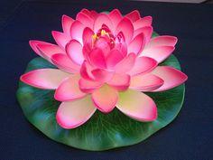 ALVAINH Bienestar y Crianza Tienda: Centro ALVAINH Lotus Flower Pictures, Flower Images, Flower Art, Flower Mandala, Flor Tattoo, Lotus Tattoo, Water Flowers, Water Lilies, Nymphaea Lotus