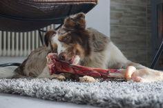 Wildknochen #hirschknochen #teppich #wohnzimmer #wildbarfonlineshop #wildknochenmix #wildknochen #australianshepherd #barf #barfen #barfer #artgerechtefütterung #artgerechteernährung #hundefutter #hundefütterung #hunde #katzen #dogs #cats #raw #rawfeeding #rawfeedingcommunity
