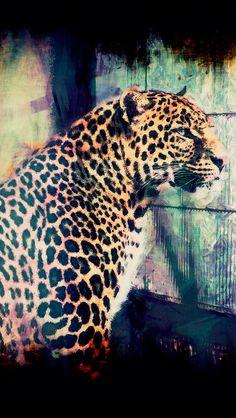 Male leopard #iPhone #5s #Wallpaper
