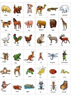 Vocabulario. Animales. Fashcards.