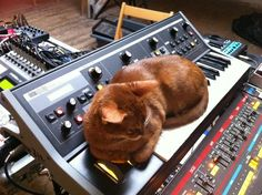 Cat and Moog Little Phatty