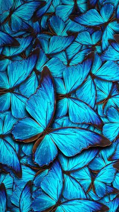 Wallpaper For Iphone Wallpapers) Blue Butterfly Wallpaper, Iphone Background Wallpaper, Aesthetic Iphone Wallpaper, Flower Wallpaper, Nature Wallpaper, Lock Screen Wallpaper, Wallpaper S, Aesthetic Wallpapers, Royal Blue Wallpaper
