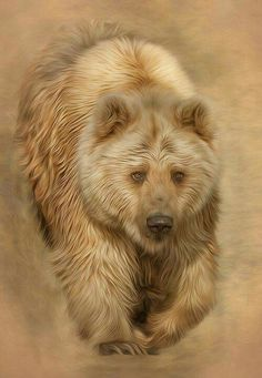 Grizzly Bear Trophy hunt ended in BC. Bear Paintings, Wildlife Paintings, Wildlife Art, Teddy Bear Pictures, Animal Pictures, Animal Sketches, Animal Drawings, Ours Grizzly, Photo Ours