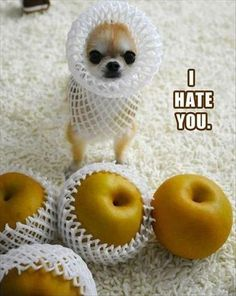 Funny Pictures 24/7 @ http://funnypictures247.com/post/funny-pictures-439/ #FunnyPictures