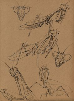 ArtStation - Insects, Floris van der Peet