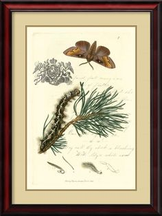 'Naturalist's Montage III' by Vision Studio Framed Graphic Art