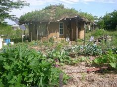 """Kent at Tiny House Blog notes that """"you can build your own cob house with little money, but with lots of time and enthusiasm."""" He shows us 24 year-old Ziggy's cob (a mixture of straw, clay, and sand similar to adobe) with a footprint of 360 square feet"""