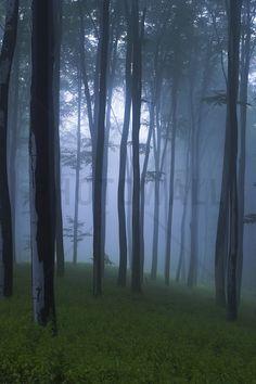Mystical Forest - Wall Mural & Photo Wallpaper - Photowall