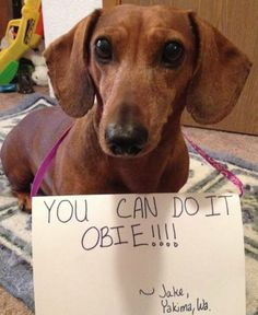 Fellow Doxie Jake sends his support!