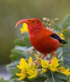 Tropical Birds, Exotic Birds, Colorful Birds, Birds 2, Wild Birds, Love Birds, Animals Of The World, Animals And Pets, Cute Animals