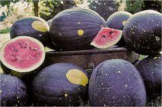 Moon and Stars heirloom watermelon.