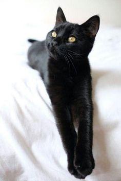 Black cat  ...