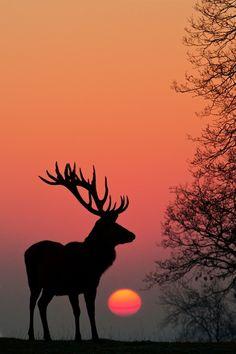 wonderous-world:  Stag Sunrise by Richard Bowler