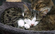 Clovis [4]  kitten