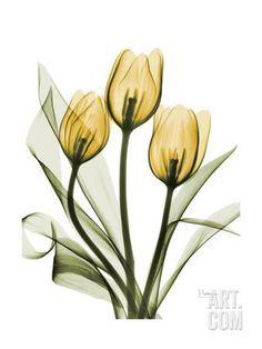 Golden Tulips Art Print by Albert Koetsier at Art.com