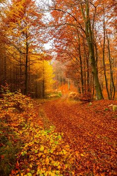Autumn trail by Bengt Sigeholt - Herbst - Travel Fall Pictures, Nature Pictures, Autumn Scenes, Autumn Aesthetic, All Nature, Autumn Nature, Autumn Forest, Beautiful Landscapes, Autumn Leaves