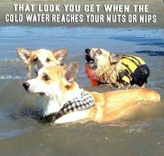Dog, I know that feeling well... That look you get when... http://ibeebz.com