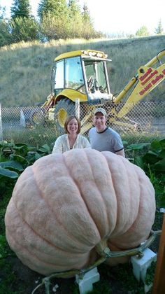 Kyle Koschmeder and his wife Janelle pose for a photo with a gourd he raised in his grandfather's garden in Shelby, Montana, USA. Exotic Fruit, Tropical Fruits, Fruit And Veg, Fruits And Vegetables, Brazilian Fruit, Balcony Herb Gardens, Growing An Avocado Tree, Giant Pumpkin, Weird Plants