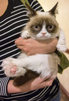 Does anyone realise how small Grumpy Cat actually is? Awwwww