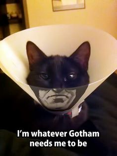 Catman, too!