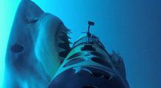 Zo ziet het er uit om door een grote witte haai aangevallen te worden