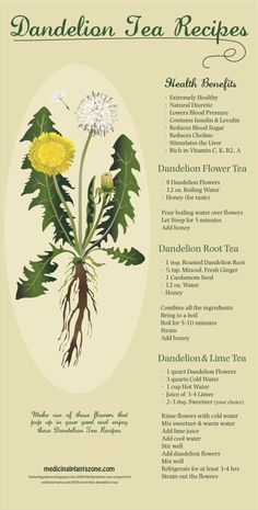 Dandelion Tea Recipes Infographic