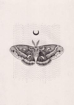 luna moth - possible forearm tattoo