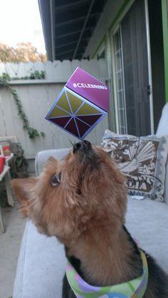 Smart Dogs #Celebr8BU!