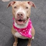 R.I.P. PROMISE | KILLED 5/7/16 || PROMISE | A1071856 |RESCUE ONLY  TO BE DESTROYED  05/07/16