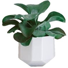 Convivial Production Riveted Planter White By ($42) ❤ liked on Polyvore featuring home, outdoors, outdoor decor, plants, fillers, home decor, decor, outdoor lawn & garden, outside planters and outdoor planters