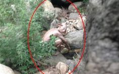 21. A 'Gollum-like' figure was spotted in the Chinese mountains by an unsuspecting climber.