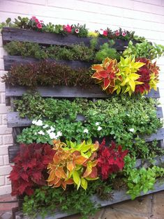 The pallet vertical gardens are growing rapidly because they carry more for captivating and stunning effects and impacts to garden