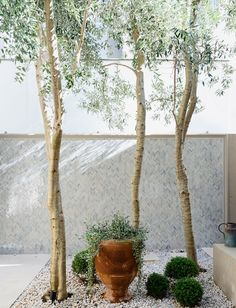 Figtree House | Arent & Pyke