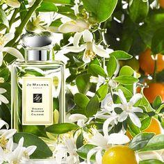 Распив парфюмерии, отливанты: Jo Malone Orange Blossom