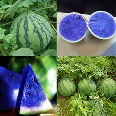 NH##10Pcs Sweet Blue Watermelon Seeds Vegetable Organic Home Garden Variety Plant