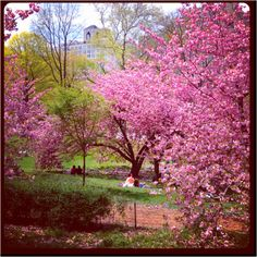 I love Central Park in the spring!
