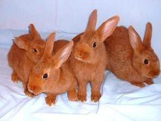 orange rabbits! *