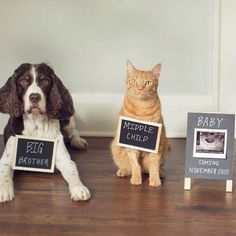 trendy baby announcement ideas with dogs funny pregnancy photos Sibling Announcement, Baby Announcement Pictures, Unique Pregnancy Announcement, Funny Birth Announcements, Erwarten Baby, Baby Dogs, Baby Birth, Kids Birth, Pregnancy Humor