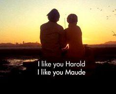 Lotus Flower: Harold & Maude...& Buddhism