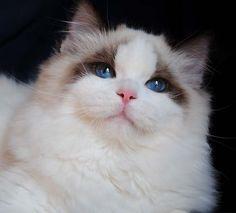 Veľké butty mačička