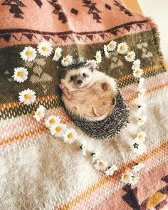 Hey everybody I am your lovely boy Baby Animals Super Cute, Cute Little Animals, Cute Funny Animals, Hedgehog Pet, Cute Hedgehog, Tier Fotos, Cute Animal Pictures, Cute Creatures, Animal Memes