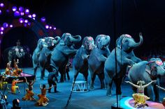 Local campaign seeks to ban use of wild animals in entertainment | The Rapidian