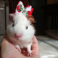Look at this baby princess with her holiday bow! So adorable.