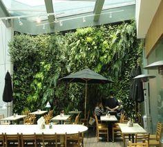 http://2.bp.blogspot.com/-P0R-VeVpnNY/TbL6mTbsAcI/AAAAAAAADjk/8773H7D6IBY/s1600/verdevertical+vertical+garden+in+cafe.JPG