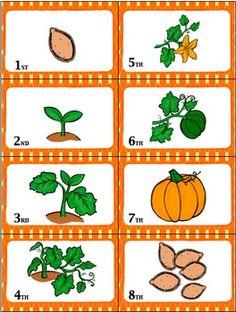"""Sequencing with Pumpkin Life Cycle """"War"""" card game center - zoe Fall Preschool Activities, Preschool Art Projects, Kindergarten Science, Preschool Lessons, Sequencing Activities, Pumpkin Games, Pumpkin Crafts, Pumpkin Preschool Crafts, Pumpkin Life Cycle"""