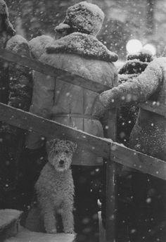 40гениальных советских фотографий «Не мое собачье дело». 1965 год. © Владимир Богданов