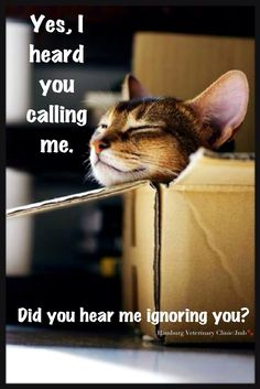 Funny cats | Animal humor | Everyday laughs | Cat behavior | We love our cats!