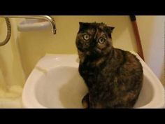 Cat Takes A Shower In The Sink